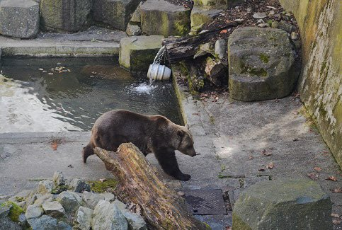 cesky krumlov castle bear