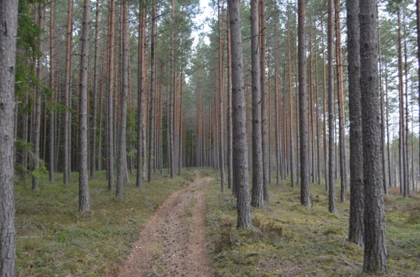 creepy haunted estonia