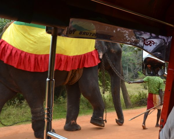 sri lanka elephant attractions