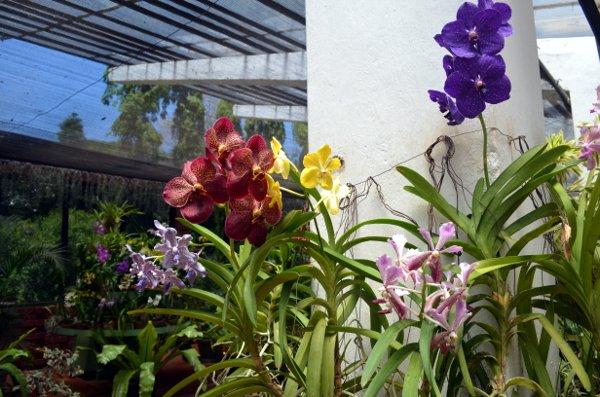 kandy botanic gardens